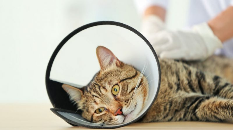 How To Care For Cat After Spay