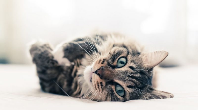 A Guide To Keeping A Cat In An Apartment Secretly