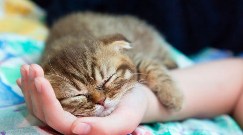 how to take care of cats properly